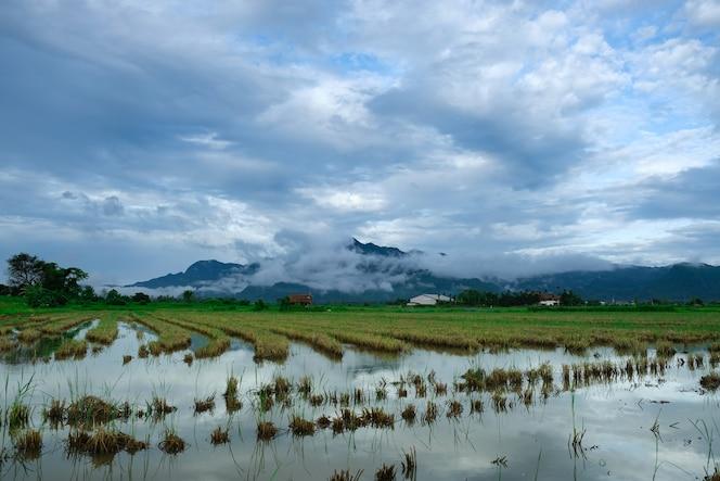 Vista de archivado de arroz con cielo azul y fondo de montaña