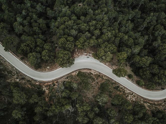 Vista elevada del camino de la curva vacía a través del bosque