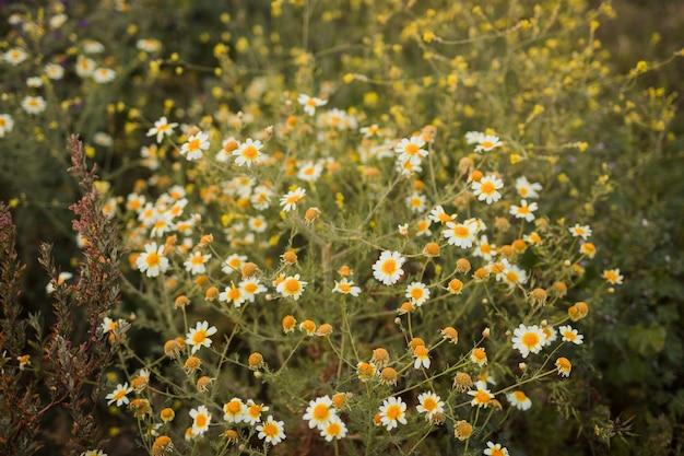 Una vista elevada de flores silvestres