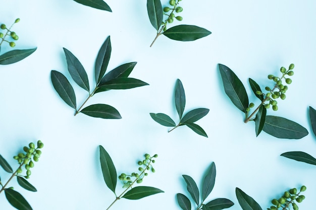 Vista elevada de hojas verdes con bayas sobre fondo azul