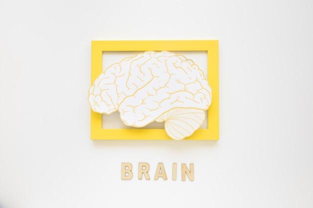 Vista elevada del marco del cerebro con texto