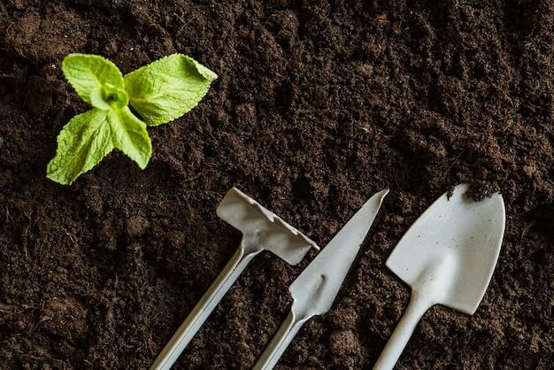Una vista elevada de la planta de menta y herramientas de jardinería sobre el suelo fértil