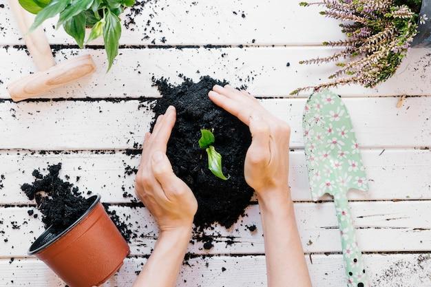 Vista elevada de la planta de plántulas de la mano de una persona en un escritorio de madera con equipos de jardinería