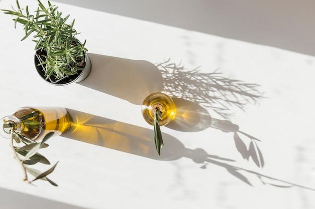Vista elevada del pote del romero con la botella de dos aceitunas bajo luz del sol