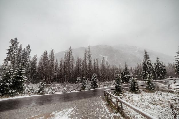 La vista escénica del camino con nieve y la montaña y el fondo de los árboles gigantes en invierno sazonan.