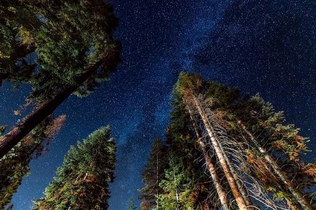 Una vista de las estrellas con bosque de pinos.