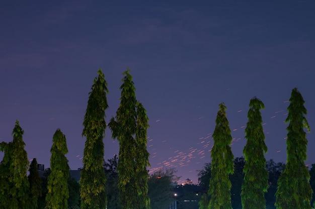 Vista de estrellas o lluvia de meteoritos con el frente de los árboles verdes. hermosa vista nocturna