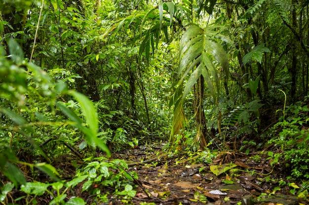 Vista de la exuberante selva tropical en costa rica