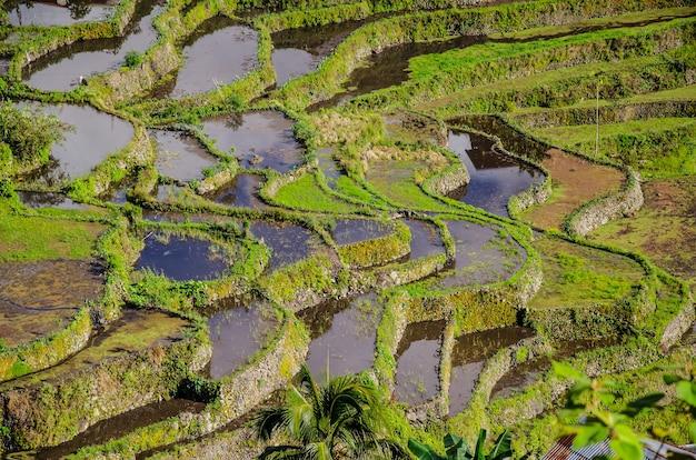 Vista fascinante de las terrazas de arroz de batad