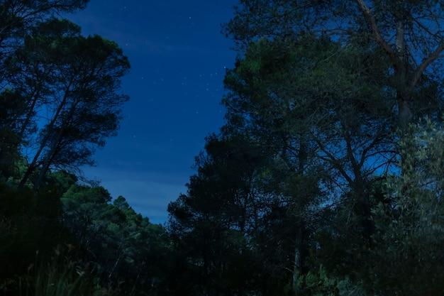 Vista frontal de árboles con fondo de cielo nocturno