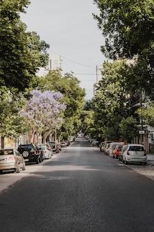 Vista frontal de la calle de la ciudad con coches y árboles.