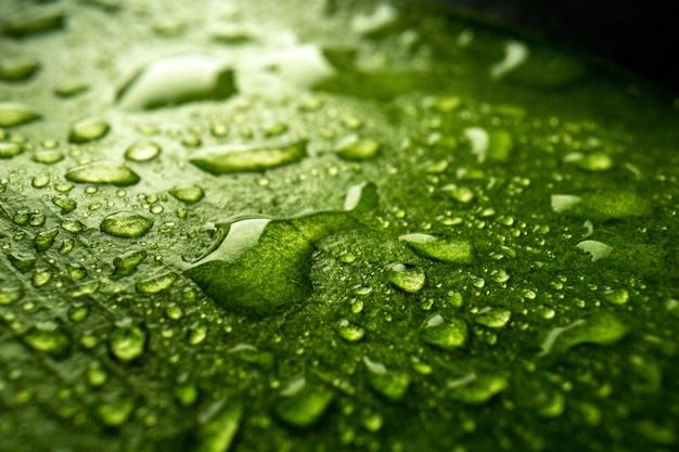 Vista frontal cercana hoja verde con gotas sobre el árbol de aire verde bosque de rocío de naturaleza de color oscuro
