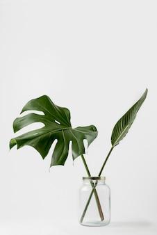 Vista frontal concepto botánico con espacio de copia