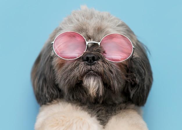 Vista frontal del concepto de perro lindo divertido