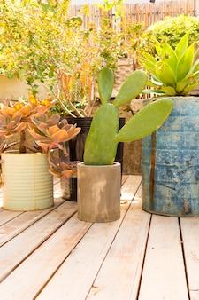 Vista frontal de diferentes plantas en invernadero