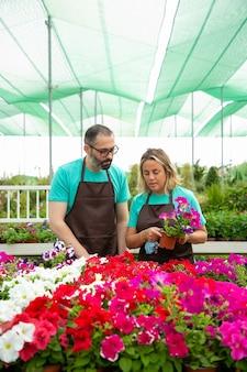 Vista frontal de dos floristas cuidando plantas de petunia en macetas