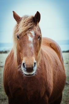 Vista frontal de un elegante caballo marrón con melena larga