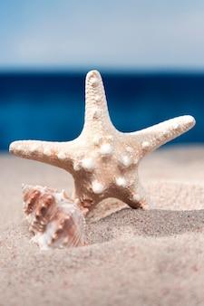 Vista frontal de estrellas de mar y conchas de mar en la arena de la playa