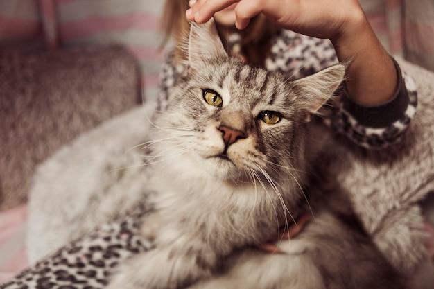 Vista frontal del gato hermoso y chica borrosa
