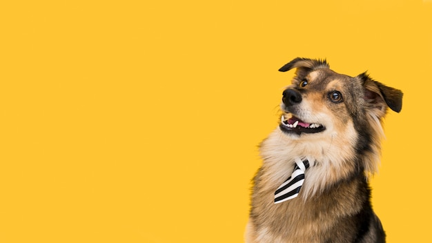 Vista frontal del hermoso perro con espacio de copia