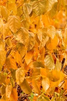 Vista frontal de hojas amarillas