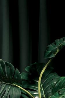 Vista frontal de las hojas de monstera con fondo oscuro.