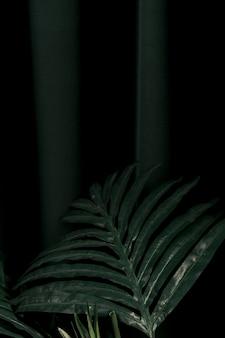 Vista frontal de las hojas de la palmera.