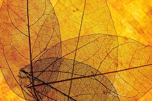 Vista frontal de hojas transparentes naranjas
