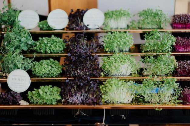 Vista frontal del jardín urbano con diferentes tipos de lechuga.