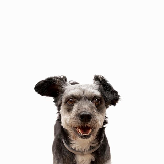 Vista frontal del lindo cachorro de raza mixta con espacio de copia