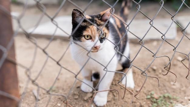 Vista frontal del lindo gato al aire libre detrás de la valla