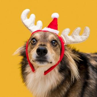 Vista frontal del lindo perro con concepto de navidad