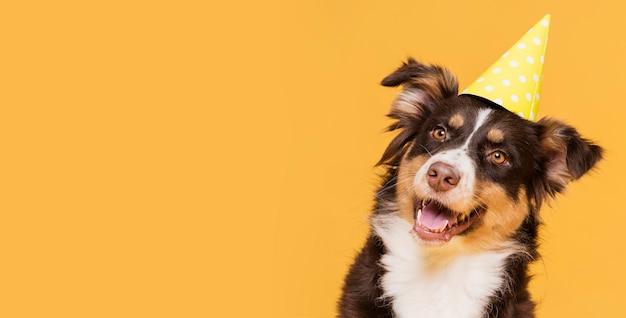 Vista frontal lindo perro con espacio de copia