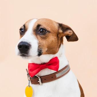 Vista frontal lindo perro con lazo rojo