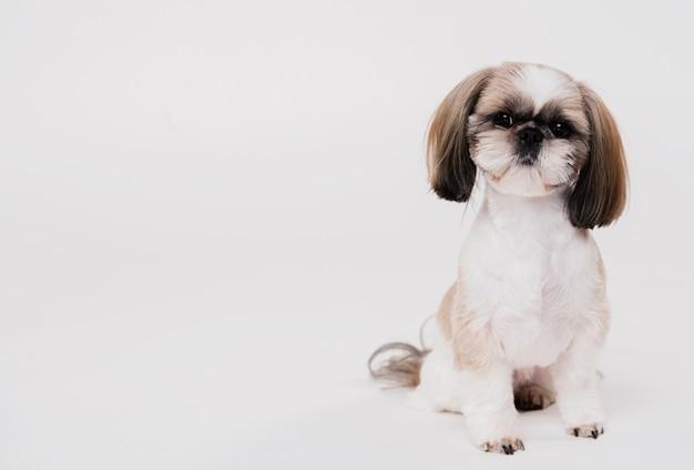 Vista frontal lindo perro pequeño