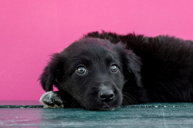 Vista frontal lindo perro sentado en el piso
