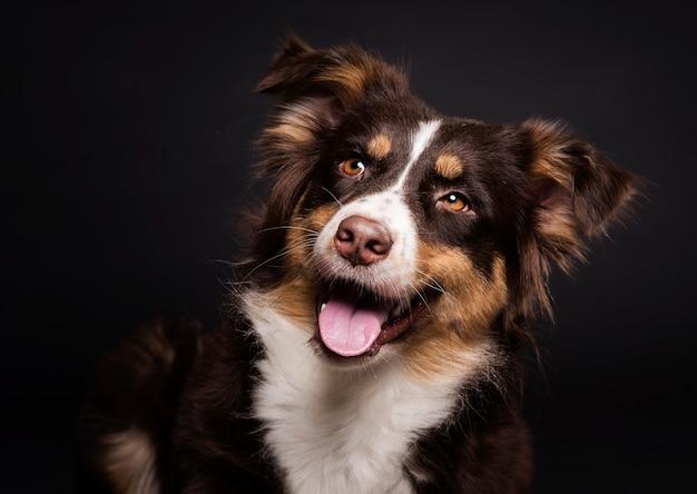 Vista frontal lindo perro