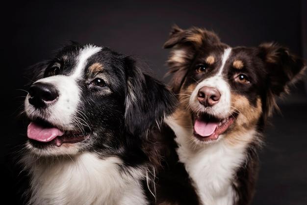 Vista frontal lindos perros