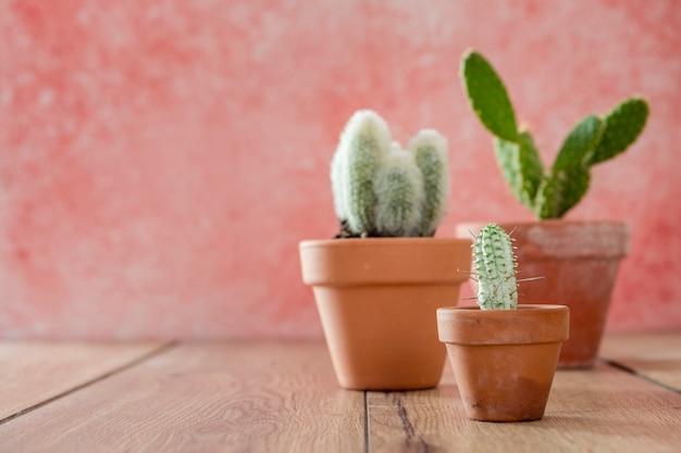 Vista frontal macetas de cactus en mesa de madera