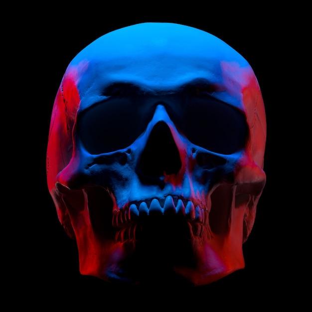 Vista frontal del modelo de yeso del cráneo humano en luces de neón aisladas sobre fondo negro con trazado de recorte