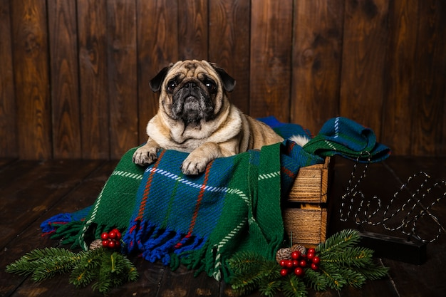 Vista frontal del perro en ataúd de madera con adornos navideños al lado