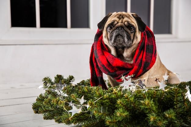 Vista frontal del perro con bufanda y adornos navideños