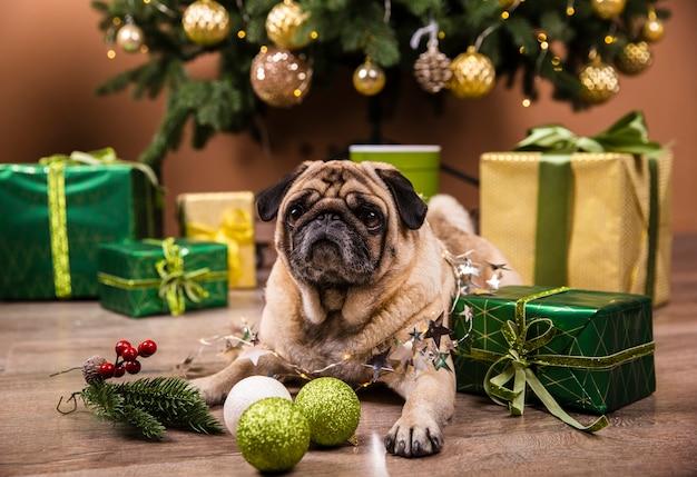 Vista frontal perro doméstico viendo regalos de navidad
