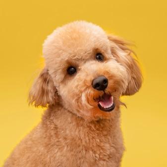 Vista frontal del perro lindo y sonriente