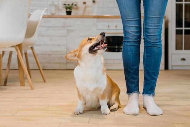 Vista frontal del perro sentado al lado y mirando al dueño