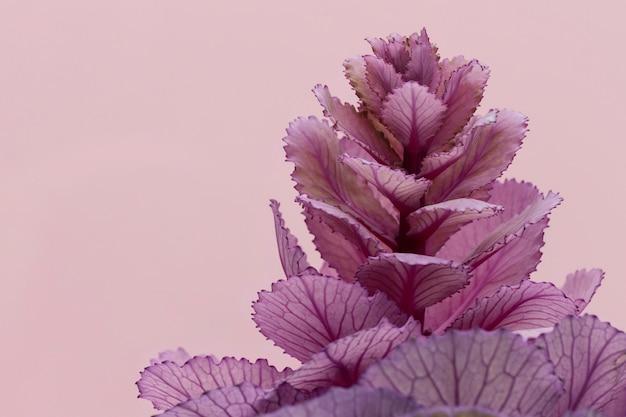 Vista frontal de la planta de primavera con espacio de copia