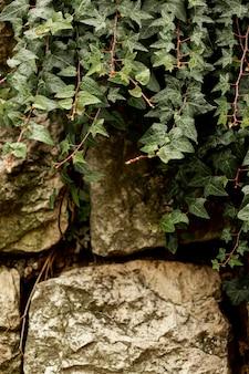 Vista frontal de la planta verde sobre piedras