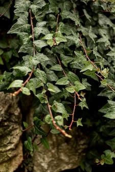 Vista frontal de la planta verde sobre rocas