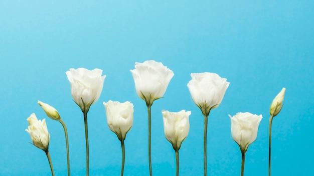 Vista frontal de rosas de primavera