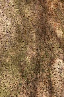 Vista frontal de la superficie de la corteza de los árboles